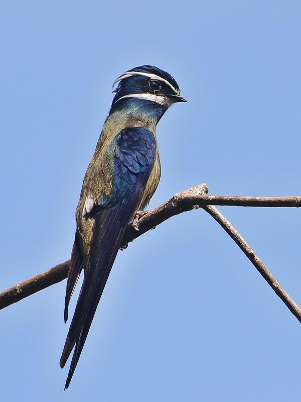 Beautiful Brach Bird