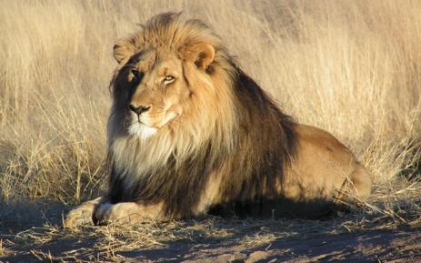 Best Lion