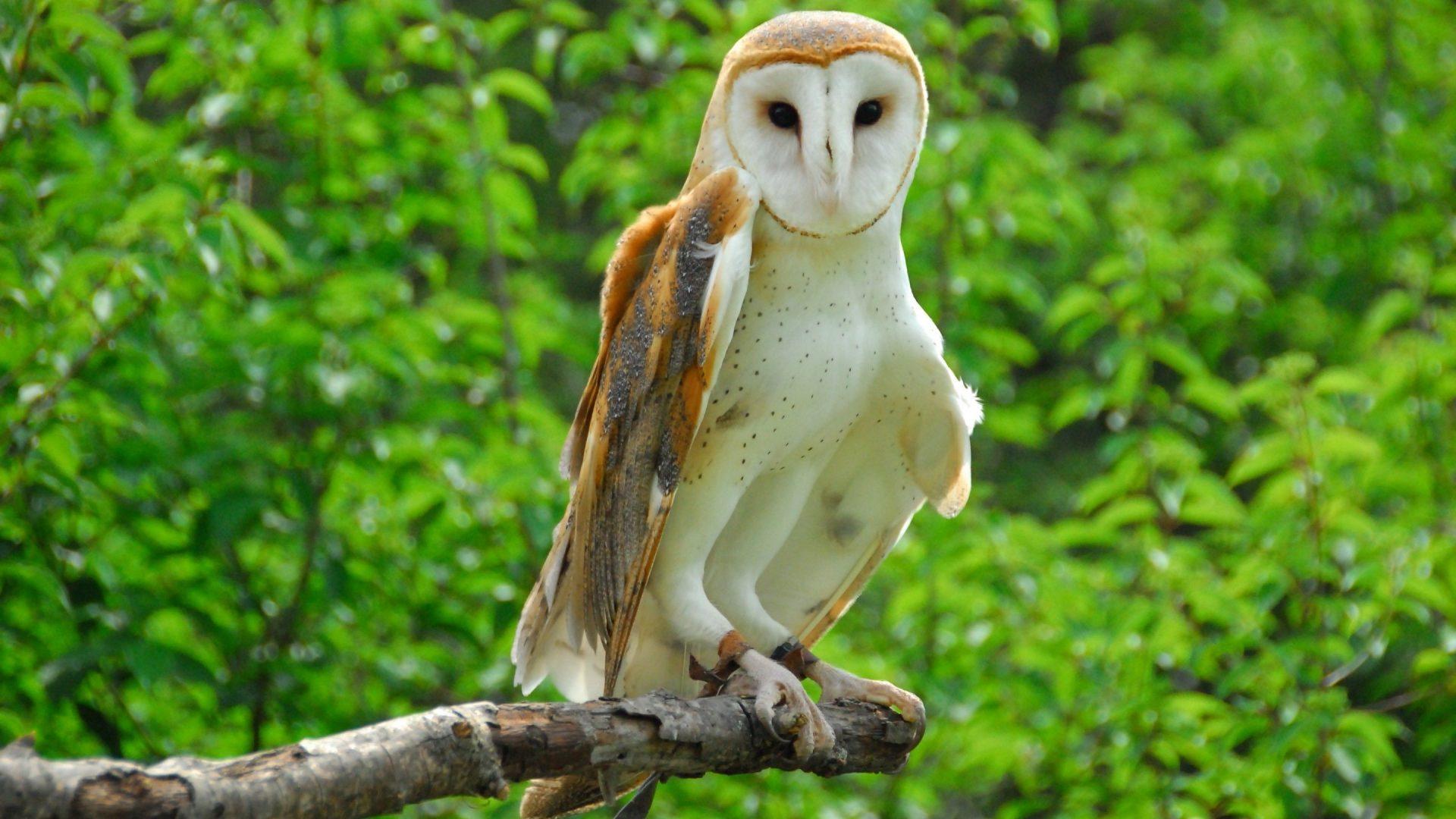 HD Brach Bird