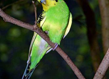 Nice Brach Bird