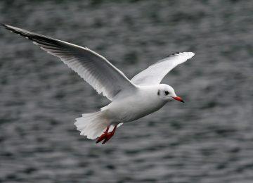 Nice Seagull Bird