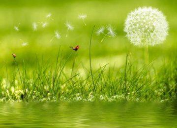 Nice Nature Background