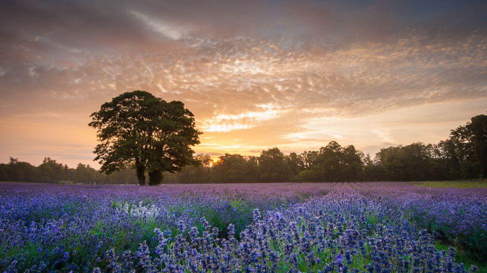 Best Landscape