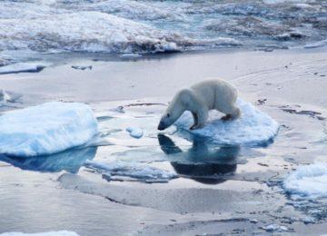Best Polar Bear