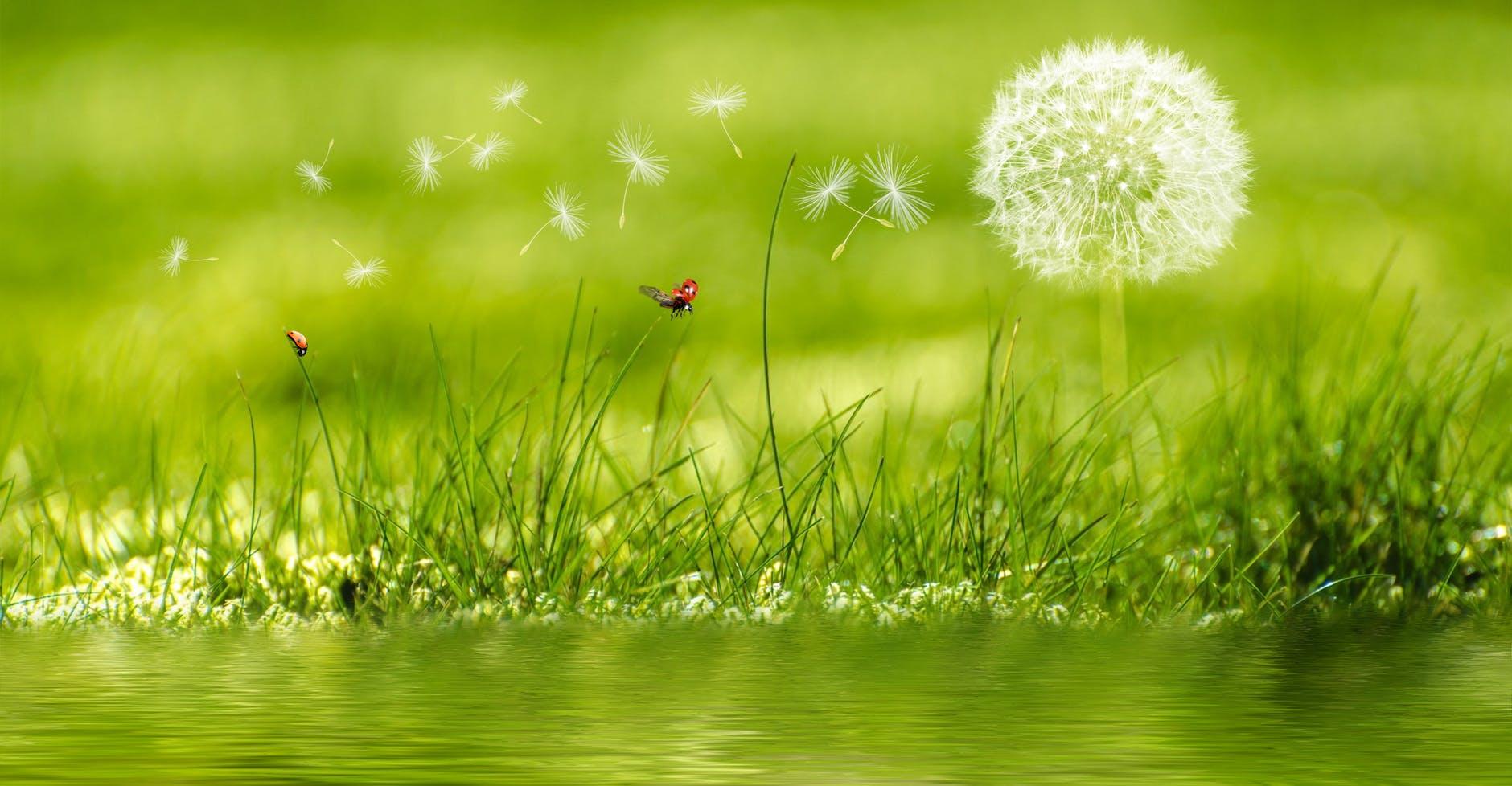 Nice Background Nature