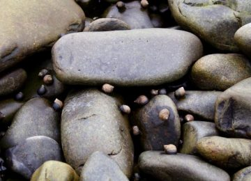 Widescreen Stones Image