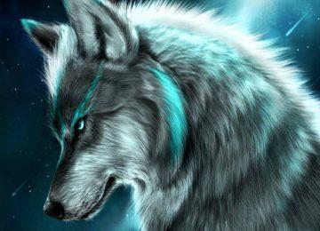 Animal Wolf Wallpaper