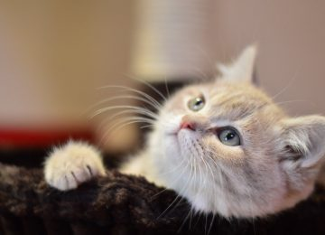 Best Funny Cat