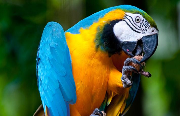Beautiful Parrot Image