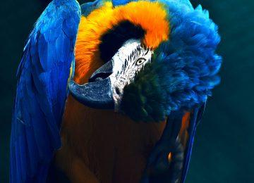Bird Parrot Image