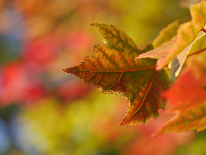 Widescreen Autumn Background