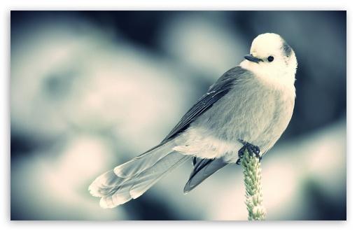 Cute Bird Wallpaper