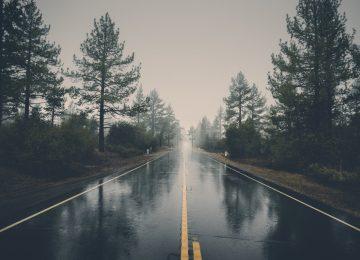 Rain Nature Image