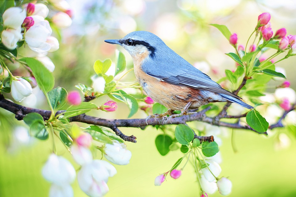Spring Nature Picture