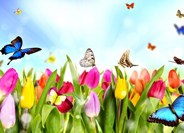 Awesome Spring Image