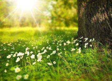 Beautiful Spring Image