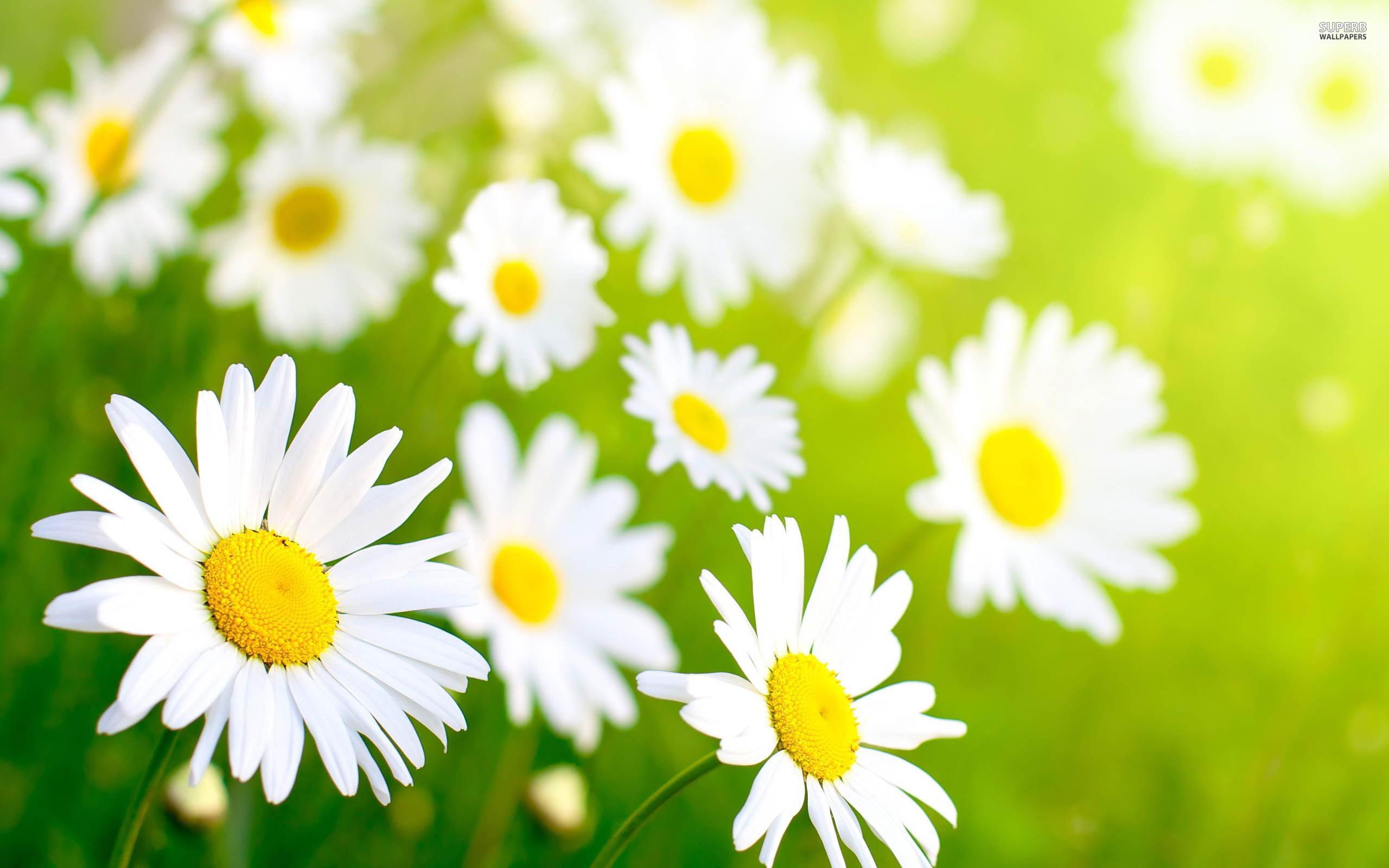 Free Spring Image