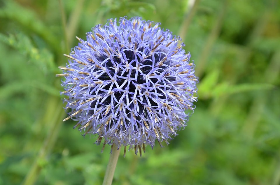 Landscape Blue Flower