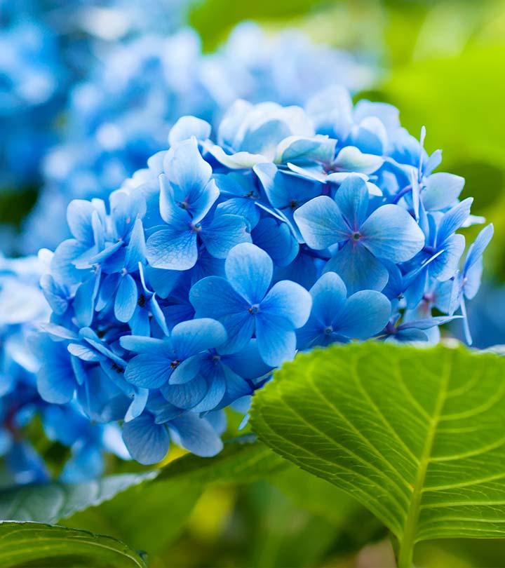 Natural Blue Flower