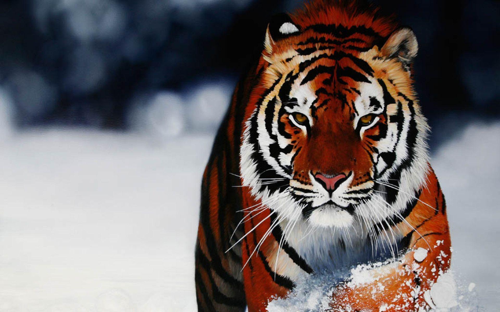 Super Tiger Wallpaper