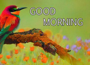 Sparrow Morning Wallpaper