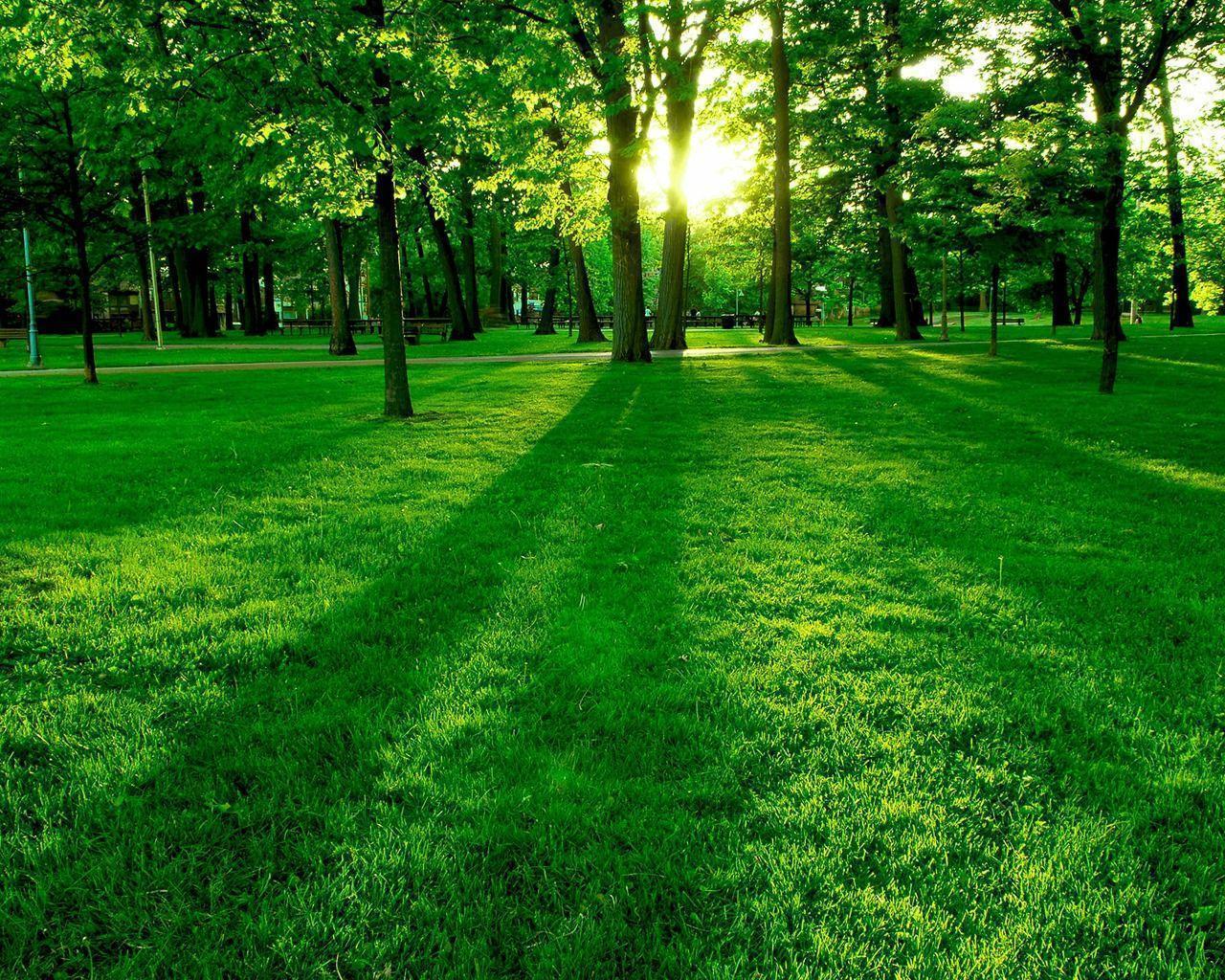 Green Tree Park Wallpaper