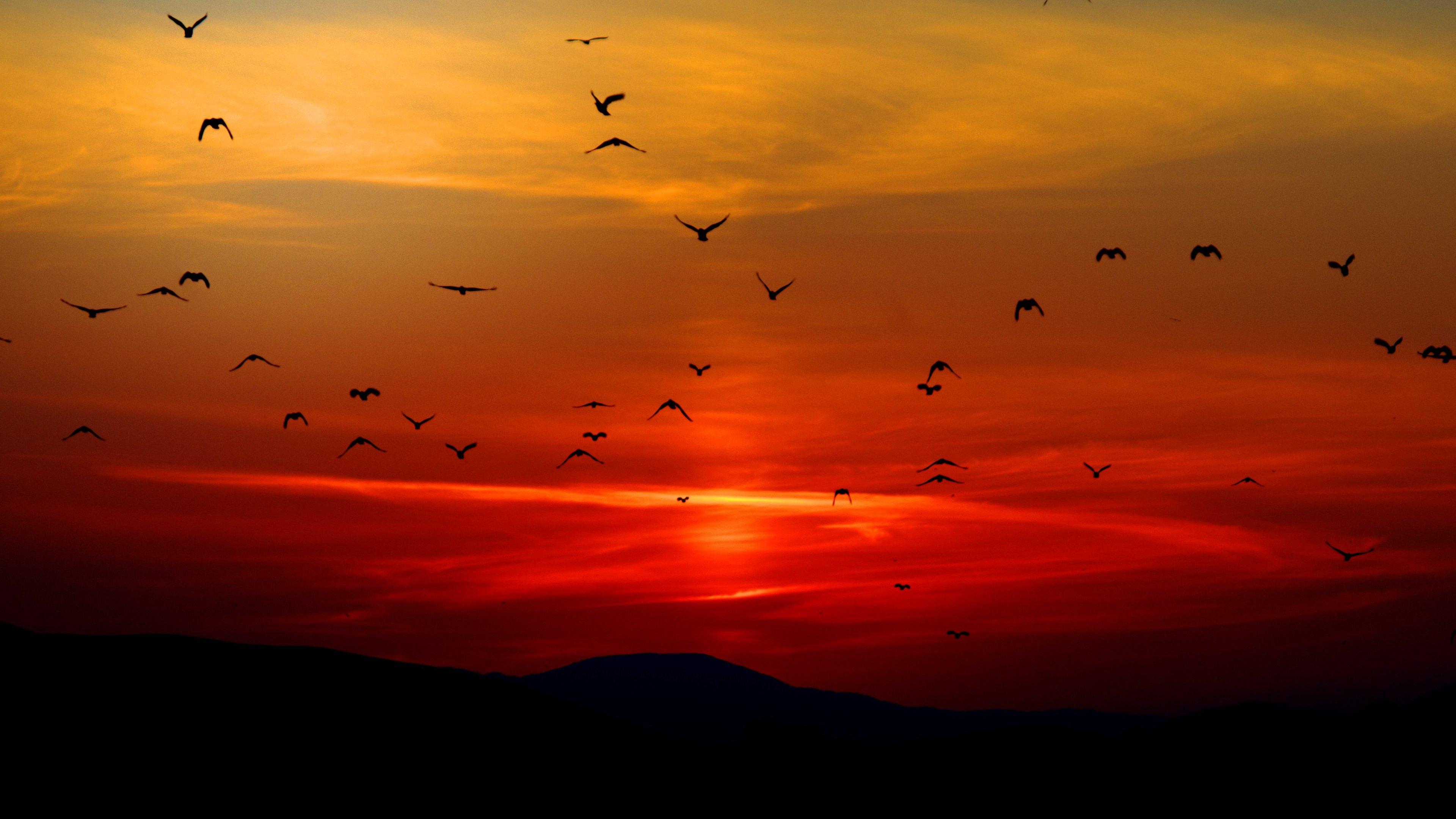 Widescreen Sunset Wallpaper