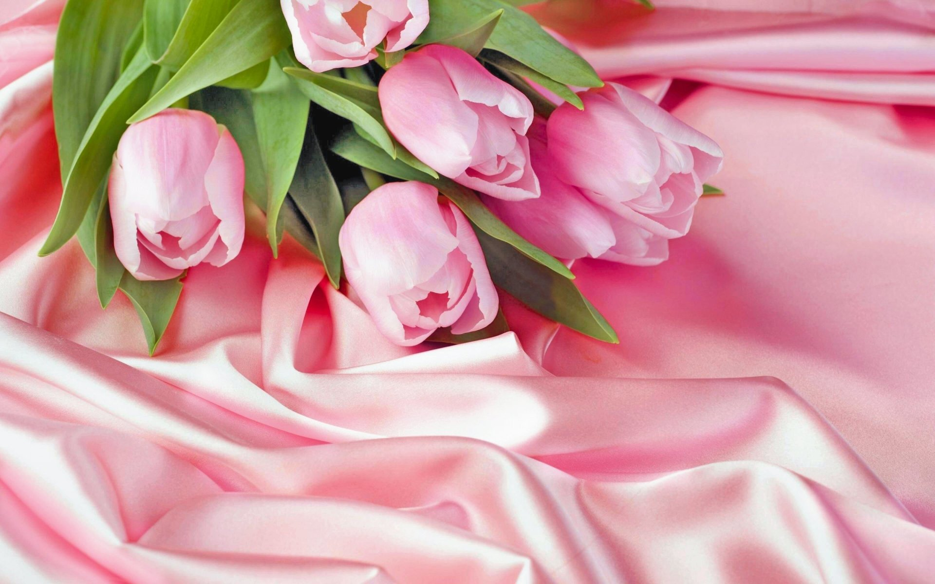 Best Tulip Wallpaper