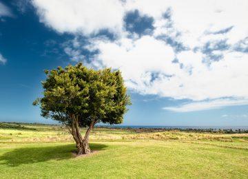 Nice Landscape Image