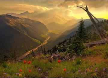 Nice HD Nature Wallpaper