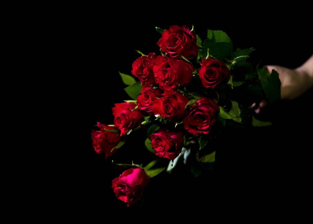 Best Red Rose