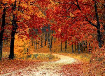 Landscape Fall Foliage
