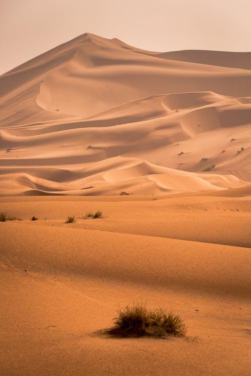Top Desert Wallpaper
