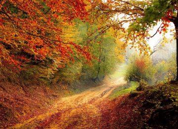 Autumn Nature Picture