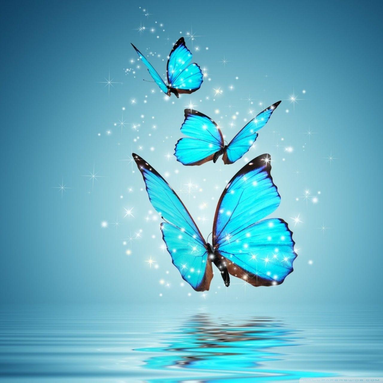Butterfly Nice Wallpaper