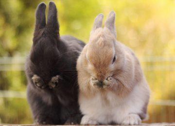 Colorful Rabbit Wallpaper