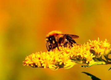 Landscape Bee Image