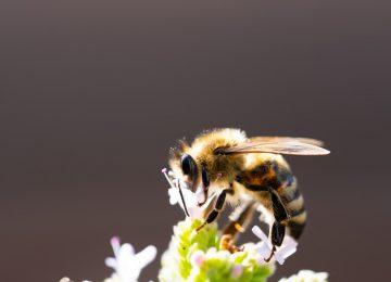 Nice Bee Image