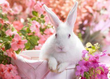 White Rabbit Wallpaper